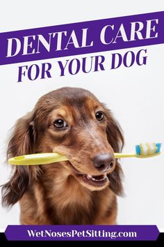 Poor dental hygiene will hurt your dog in the long run. Learn how to take care of your pets teeth.  Wet Noses Pet SittingFort Collins, Loveland, Greeley, WindsorPet Sitter, Dog Walker, Cat Sitter