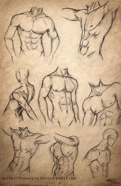 sketches | Male Body Sketches by Vinnie14 on deviantART: