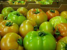 tomate de ensalada