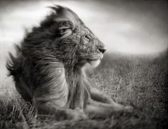 Out and About Africa: Let's Talk: Escapade. Photo by Nick Brandt.