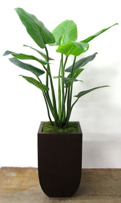 PL1049  Bird of Paradise with Green Sheet Moss in Curved Tapered Tall Bronze Zinc Container 69