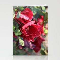 10% Off + Free Shipping Today! #art,#print,#hibiscus,#sale #greeting, #card  Set of folded stationery cards printed on bright white, smooth card stock to bring your personal artistic style to everyday correspondence.  Each card is blank on the inside and includes a soft white, European fold envelope for mailing.