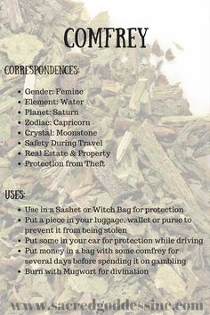 Magick Herb Comfrey for sale Magic Herbs, Herbal Magic, Plant Magic, Natural Medicine, Herbal Medicine, Green Witchcraft, Wiccan Witch, Magick Spells, Healing Spells