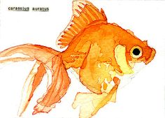 Goldfish | Carol Kroll Art #aceo #watercolor