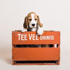 One Unusual Trick STOPS Your Beagle Jumping Up! - beagle #beagle