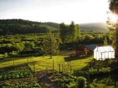 Our website has a LOT of good self sufficiency information! If you're a member of the SS board on Pinterest, come over to our website and take a look around. 4 Years of info on gardening, preserving, raising animals and more at http://www.countrylivinginacariboovalley.com/