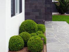 Crazing paving: bluestone crazing paving path and honed bluestone walling