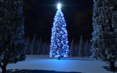 xmas Live Wallpaper For Pc - Saferbrowser Yahoo Image Search Results Christmas Tree Outside, Christmas Tree Background, 3d Christmas, Beautiful Christmas Trees, Christmas Pictures, Christmas Heaven, Xmas Tree, Tree Hd Wallpaper, Wallpaper Natal