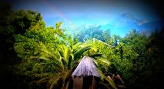 3HOURS The Amazon rainforest sounds - Jungle in Venezuela - YouTube