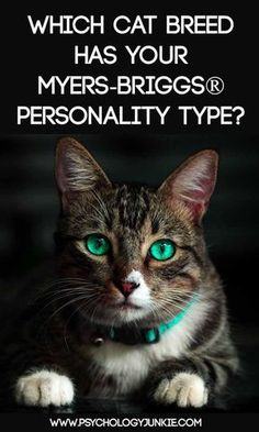 Which Cat Breed Fits Your Myers-Briggs® Personality Type – Psychology Junkie Mbti Personality, Myers Briggs Personality Types, Personality Profile, Boy Cat Names, Kitten Names, Pet Names, Hawaiian Names, Mean Cat, Pets