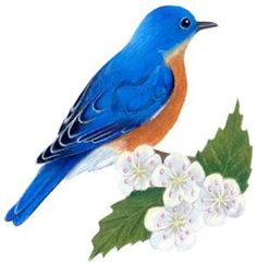 Mississippi State Bird and Flower - Bing Images