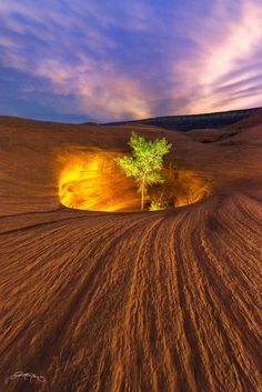 Solitary tree growing on Dance Hall Rock, Grand Staircase-Escalante National Monument, Utah | Photo Inner Light by Dustin LeFevre