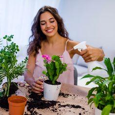 Odata cu venirea iernii, multe case pot deveni neprimitoare pentru plante. Unele sunt prea reci, prea calde, cu un aer uscat si, mai ales, fara prea multa lumina naturala care sa le ajute la procesul de fotosinteza si sa le tina in viata.