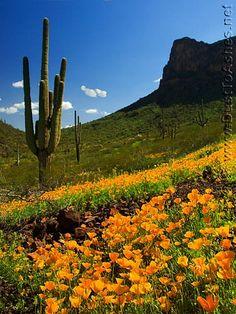 Picacho Peak. Arizona.