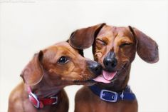 Comment: Doxies.  From Little Friends Photo, where my Mom got my dachshund calendar.