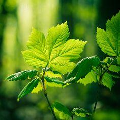 les feuilles vertes by somebody–elsePortugal