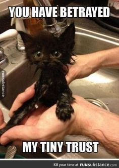 Very interesting post: 24 Funny Cats and Kittens Pictures.сom lot of interesting things on Funny Animals, Funny Cat. Funny Animal Jokes, Funny Cat Memes, Cute Funny Animals, Funny Animal Pictures, Cute Baby Animals, Funny Cute, Cute Cats, Hilarious Sayings, Funniest Pictures