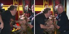 Un momento emocionante, ver a éste hombre reencontrarse con su perro extraviado de 18 años de ed...