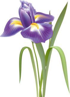 pontiac s rebellion an overview purple iris clip art and flower rh pinterest com irish clip art iris clip art black and white