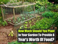 How Much Should You Plant In Your Garden To Provide A Year's Worth Of Food? - SHTF Preparedness