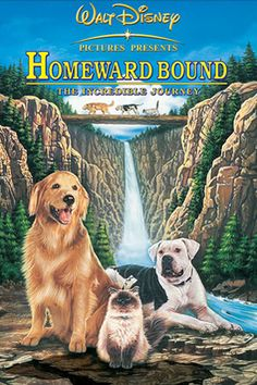 What do people think of Homeward Bound: The Incredible Journey? See opinions and rankings about Homeward Bound: The Incredible Journey across various lists and topics. Childhood Movies, All Movies, Family Movies, Great Movies, Movies To Watch, Movies Online, Awesome Movies, Popular Movies, Disney Dvd