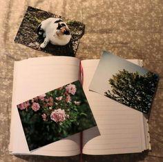 Hopes and dreams     #hopes #dreams #book #sogni #foto #photos #bedroom #camera #free #libertà #speranze