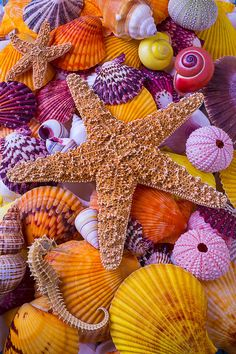 Sea Shells Sea Urchins Seanails Starfish Seahorse – Bahri Ermis – Join the world of pin Iphone Wallpaper Ocean, Summer Wallpaper, Beach Wallpaper, Colorful Wallpaper, Nature Wallpaper, Wallpaper Backgrounds, Orange Aesthetic, Shell Art, Shell Crafts
