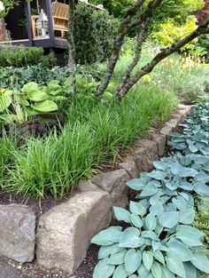 No grass front yard contemporary landscape - I love hostas