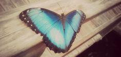 butterfly in Tenerife island, Spain