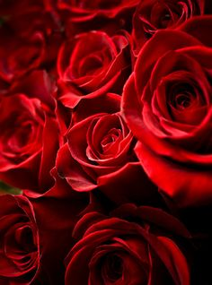 lifeisverybeautiful:  c-a-n-d-y—k-i-s-s-e-s:  CANDY KISSES: Red roses