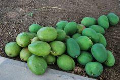 Andhra Mango Avakai Pickle 1Kg