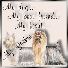 yorkies extended family friends i am very thankful for my ...