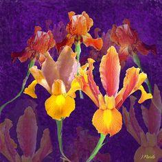Bronze Iris: Fine Art Print available on Fine Art America.