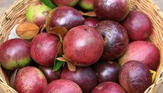 kaimito/star apple