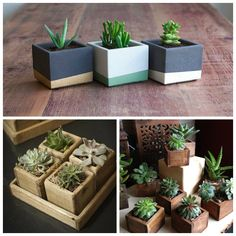 Square pots colored and wood Flowering Succulents, Cacti And Succulents, Diy Planters, Planter Pots, Succulent Gardening, Succulent Planters, Succulents In Containers, Backyard Garden Design, Plant Pictures