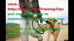 how to train your dog not to bark at guests