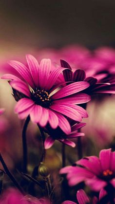 Flowers Nature, Pretty Flowers, Pink Flowers, Beautiful Flower Quotes, Beautiful Flowers Wallpapers, Yuumei Art, Attractive Wallpapers, Virtual Flowers, Lily Painting
