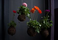 Poppies.  I think I'll try making some of these moss balls using floral foam wrapped in moss and twine or Oasis aluminim wire for a bit of bling--and cut flowers.  Or why not level bottom and set atop a cute vase?  Or how about creating a handle so they could be carried as a bouquet?