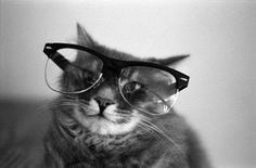 Black and White Photography Cat wearing glasses by hoytramey, $15.95