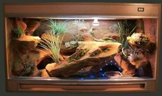 Wonderful No Cost Reptile Terrarium room Tips No doubt of which developing a puppy may bring unknown delight to help a person's life. Wonderful No Cost Reptile Terrarium room Tips Skylar Braddock snbr Bearded Dragon Vivarium, Bearded Dragon Enclosure, Bearded Dragon Terrarium, Bearded Dragon Habitat, Bearded Dragon Cage, Reptile House, Reptile Room, Reptile Cage, Leopard Gecko Habitat