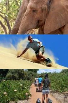 cool destinations in South Africa South Africa, Destinations, Elephant, Places To Visit, Cool Stuff, Animals, Men, Shopping, Animales