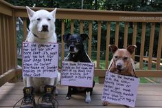 Giddy and Twinkle's Tip of the Day appearance by Nugget)……. Funny Animal Pictures, Funny Animals, Cute Animals, Rescue Dogs, Animal Rescue, Pet Life, White Dogs, Dog Park, Animal Quotes