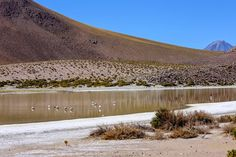 Alguns flamingos ... . . #viajandodecarro #landrover #landroverdefender #defender90 #ruta #carretera #peru #chile  #argentina #cusco #machupicchu #puno #titicaca #atacama #atacamadesert #altiplano #onelifeliveit #fabioamaral #curtindoavidaadoidado #desiertodeatacama #natgeo #nationalgeographic #netgeotravel #flamingos by fabioamaralfotografias Alguns flamingos ... . . #viajandodecarro #landrover #landroverdefender #defender90 #ruta #carretera #peru #chile  #argentina #cusco #machupicchu…