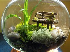 #Fairy garden terrarium with moss & lichen
