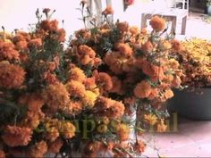 A visit to Oaxaca for Day of the Dead - YouTube