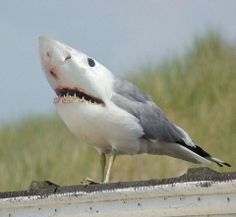 Shark bird......for Chrissie and Duffy!!!!!!