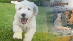 Abundant Nutrition for the Life of your   Pets!  www.cindyspetcafe.com