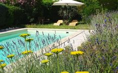 Housesitter to care for garden and pool summer 2020 (june - september) House Sitting Pictures and Photo Gallery by Housecarers Homeowner Username delalucy looking for House Sitter. House Sitting, Going Away, 4 Months, Jun, Photo Galleries, Exotic, Environment, France, Outdoor Decor
