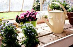 Îngrijirea plantelor, tihna ta
