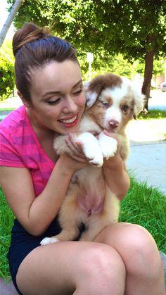 Kora, Australian shepherd puppy 8 weeks old